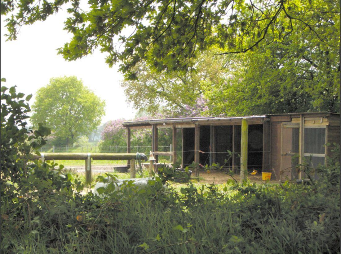 CA Reitschultest 0706 Eggenhof4 (jpg)