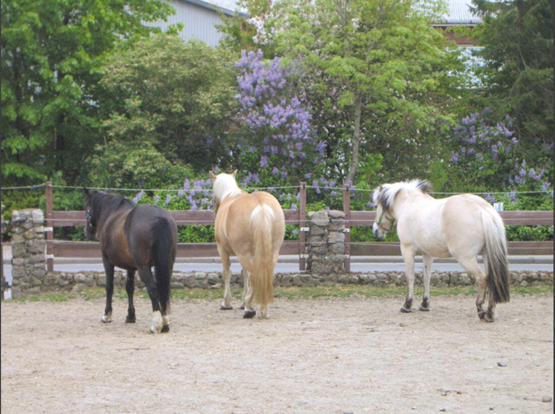 CA Reitschultest 0706 Ponyfarm2 (jpg)