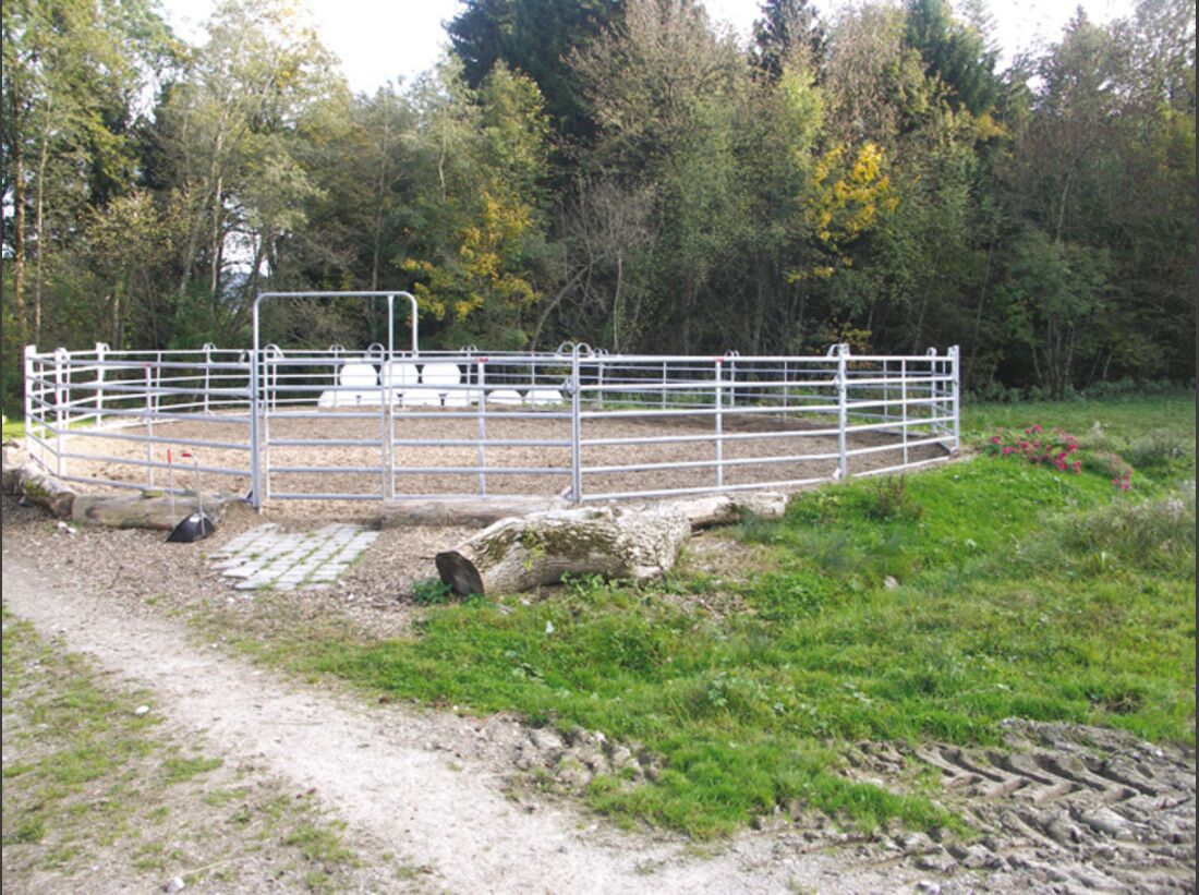CA Reitschultest 1206 Saddle2 (jpg)