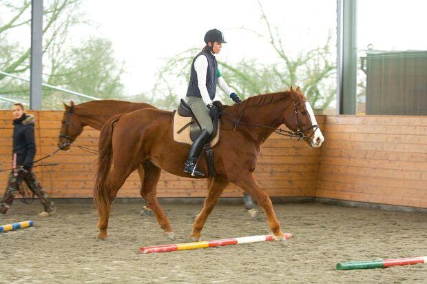 CAV 0208 Reiterstresstypen - Der Grübler