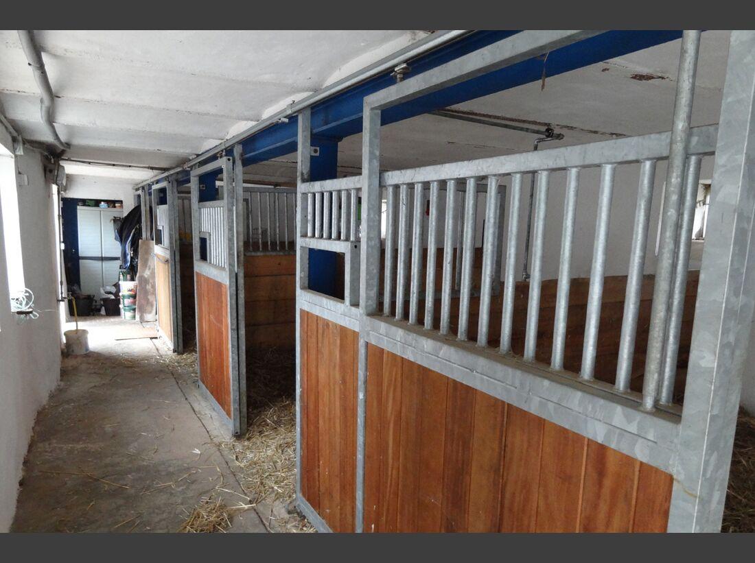 CAV-0212-Reitschultest-Hessen-Indian-Sky-Ranch-Boxen (jpg)