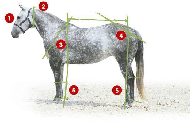 CAV 0503 Exterieur_Quarter Horses_04 (jpg)