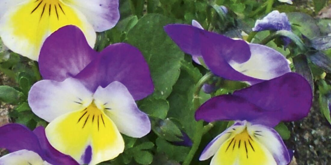 CAV 06_2010 Giftpflanzen_380069_R_by_photoforlife_pixelio (jpg)