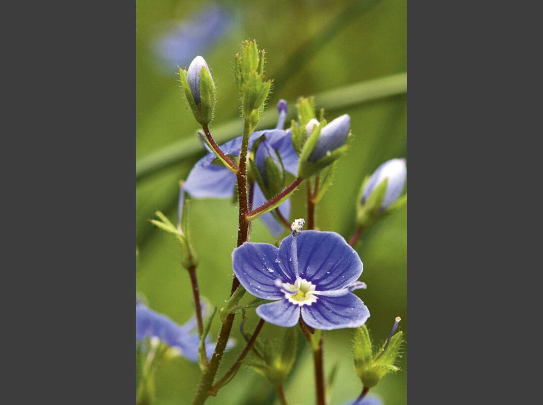 CAV 06_2010 Giftpflanzen_Fotolia_13978575_S (jpg)