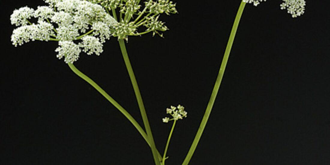 CAV 06_2010 Giftpflanzen_Fotolia_18394223_S (jpg)