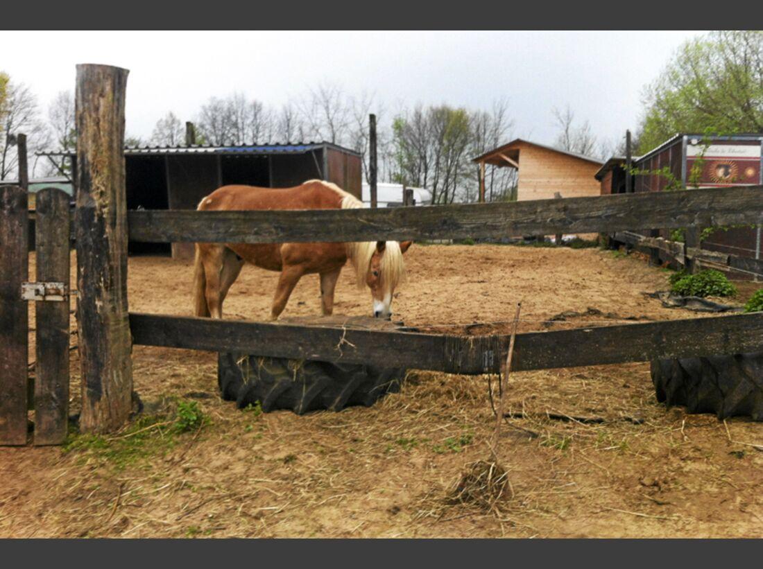 CAV-0714-Reitschultest-Hameln-Lucky-Rider-Ranch-4