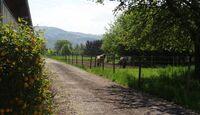 CAV-0813-Reitschultest-Mooswaldhof 03_Landwehr