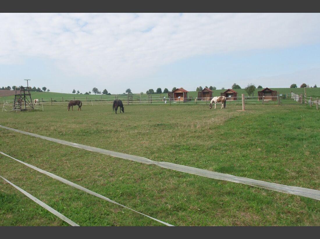 CAV-1111-Reitschultest-Kraichgau-Moonlight-Ranch-3 (jpg)