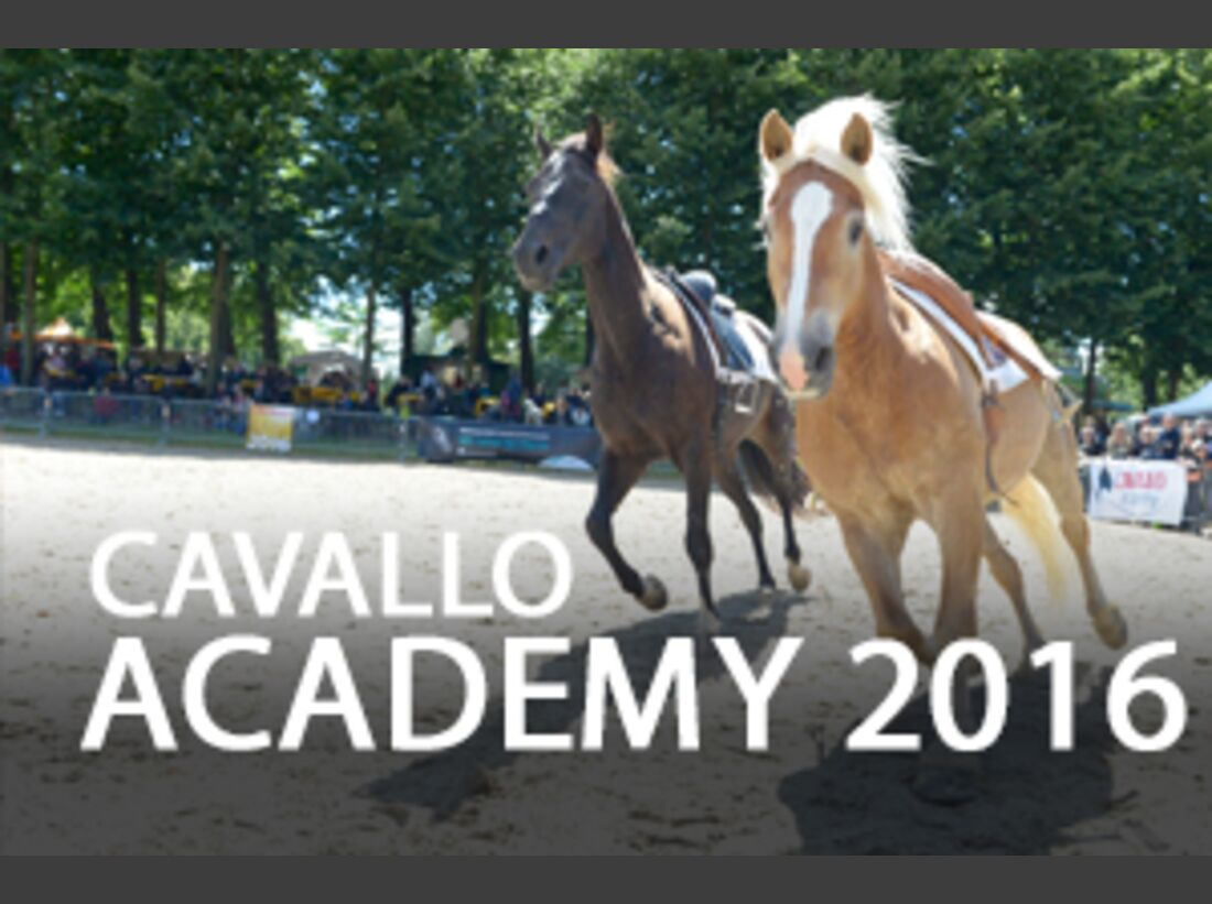 CAV Academy 2016 Ralf Heil