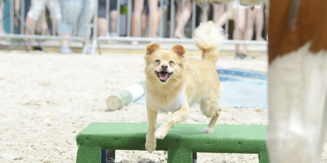 CAV Academy 2017 Horse Dog Trail