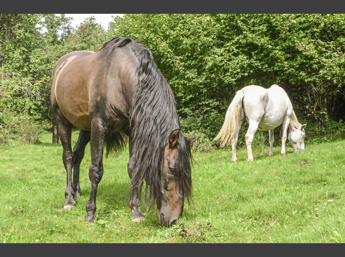 CAV Allein in der Pferde-Herde Aufmacher 05