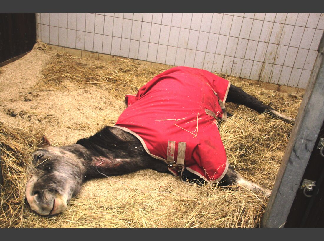 CAV Amour Tierschutz Yvonne Gutsche 21.1. Festliegen