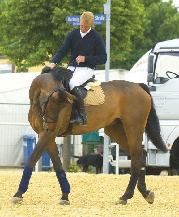 CAV Angst bei Sportpferden Bild2
