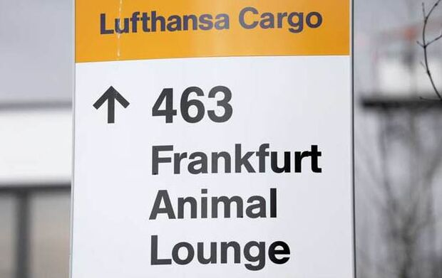CAV Animal Lounge