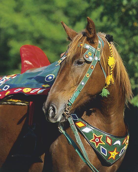 CAV Araber-Berber 11_2002 Bild 6