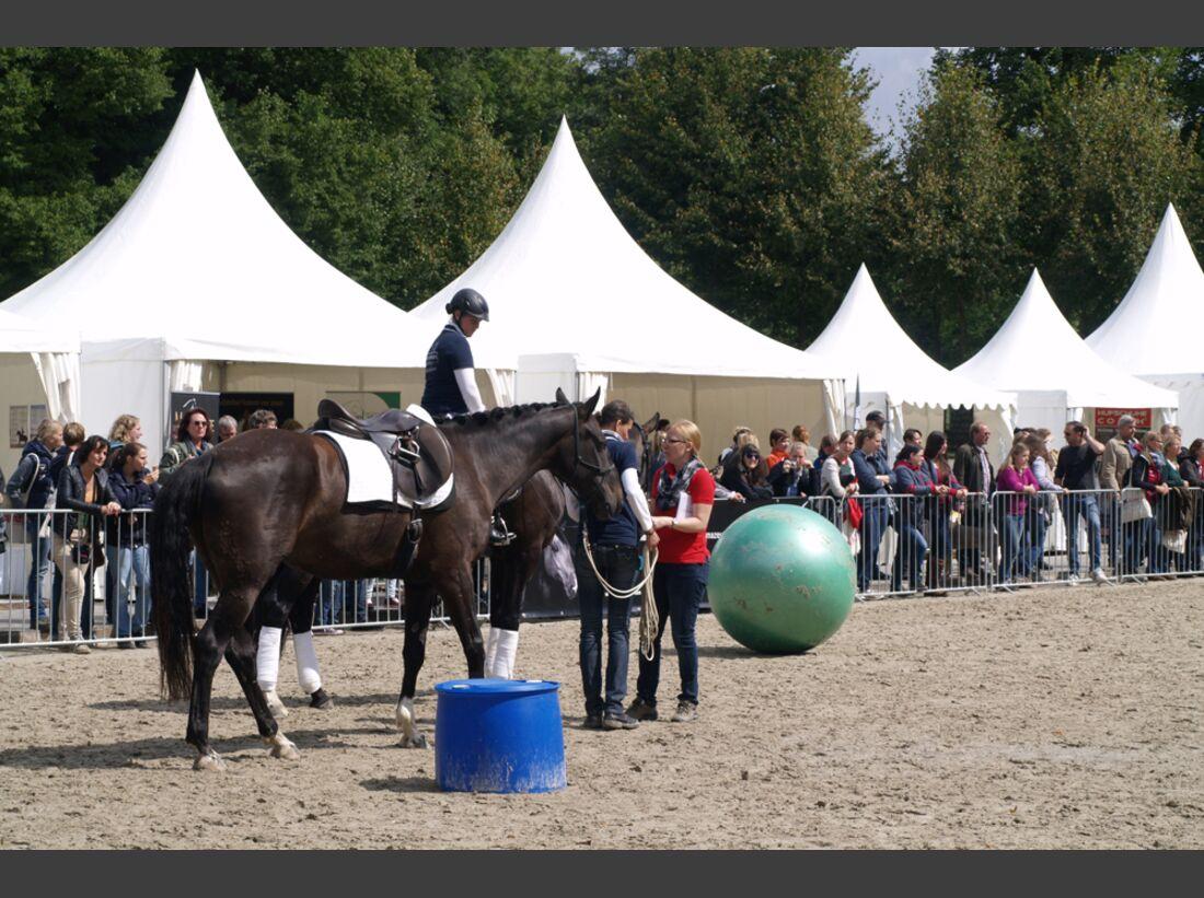 CAV-Cavallo-Academy-2014-23 (jpg)