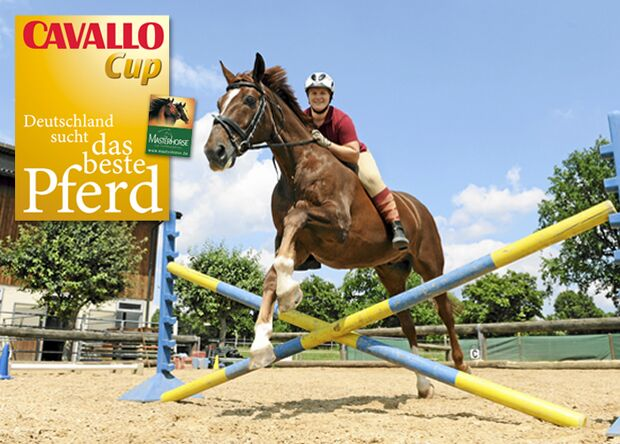 CAV Cavallo Cup Anne Windhager
