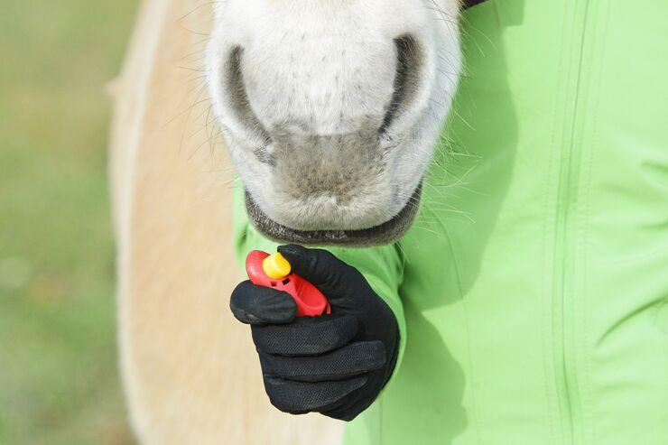 CAV Clickertraining mit Pferd