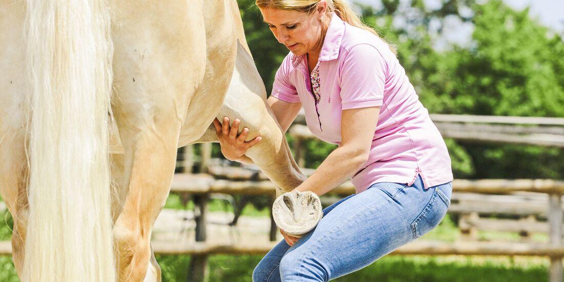 CAV Dehnen Pferd 8
