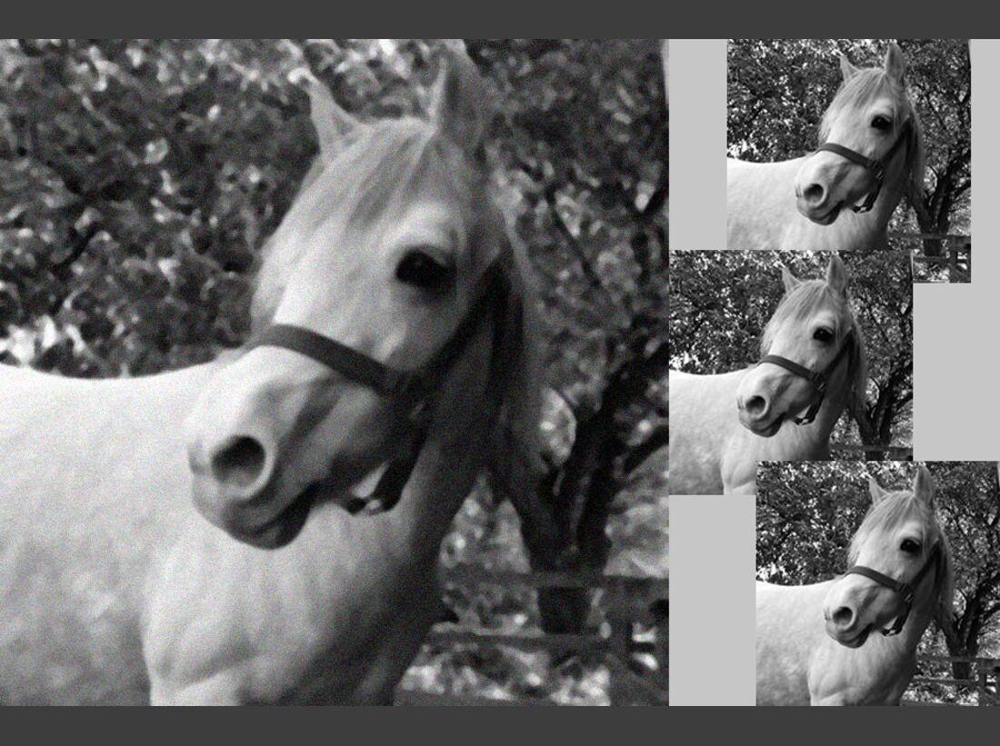 CAV Fan-Pferde Fienchen June Reinhardt