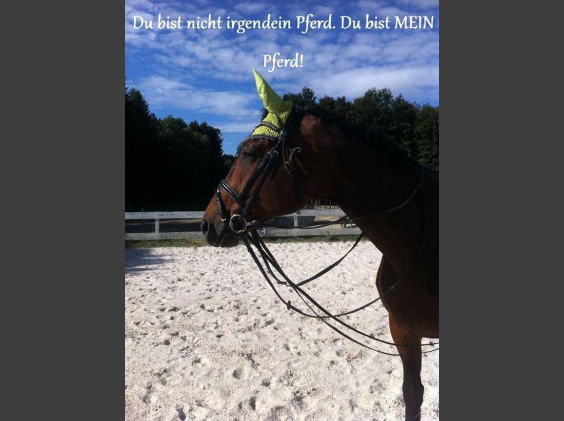 CAV-Fan-Pferde-Leseraktion-2013-Epikus-Boy (JPG)