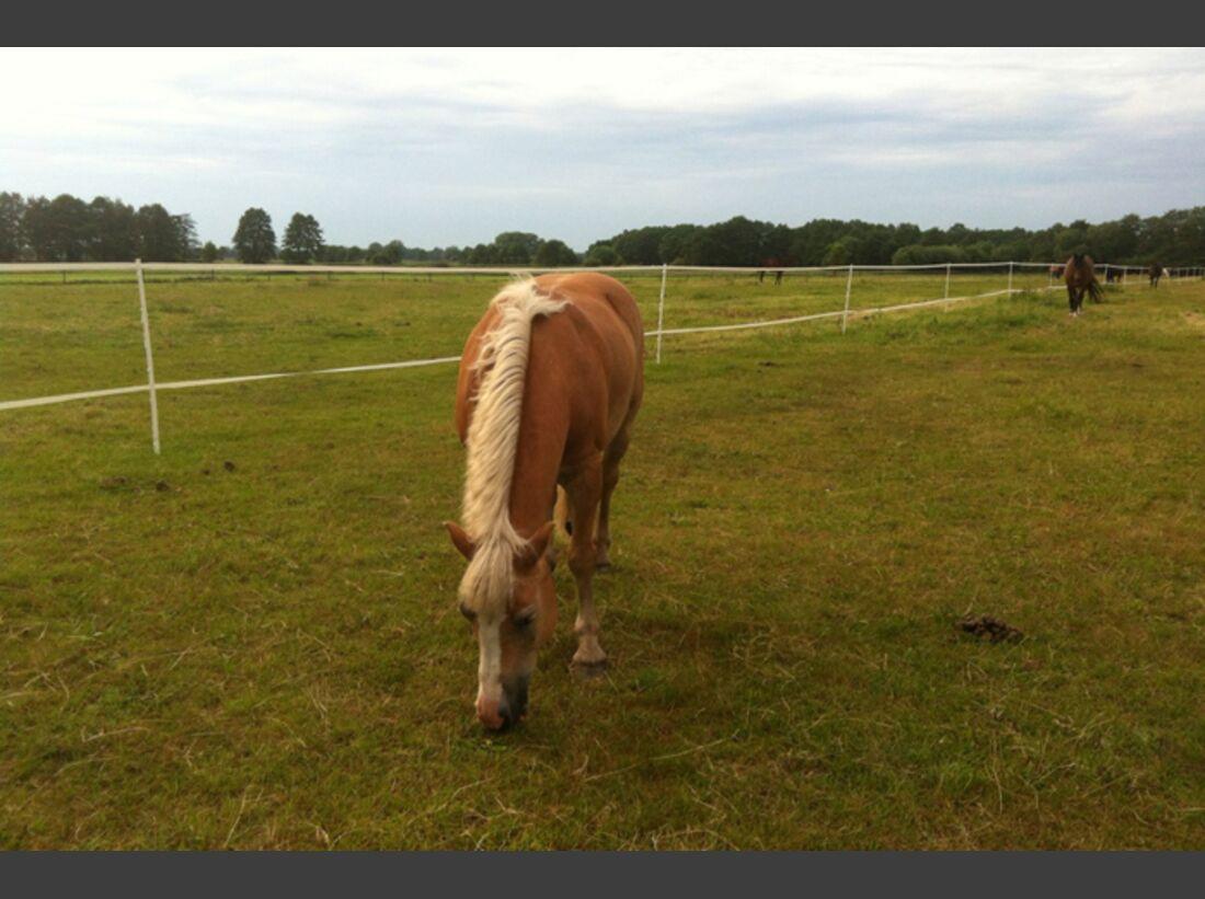 CAV-Fan-Pferde-Leseraktion-2013-Golfyne (jpg)