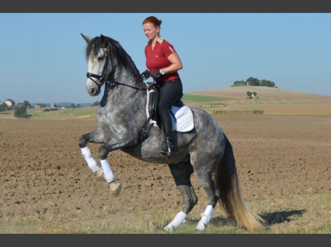 CAV-Fan-Pferde-Leseraktion-2013-Orfea (JPG)