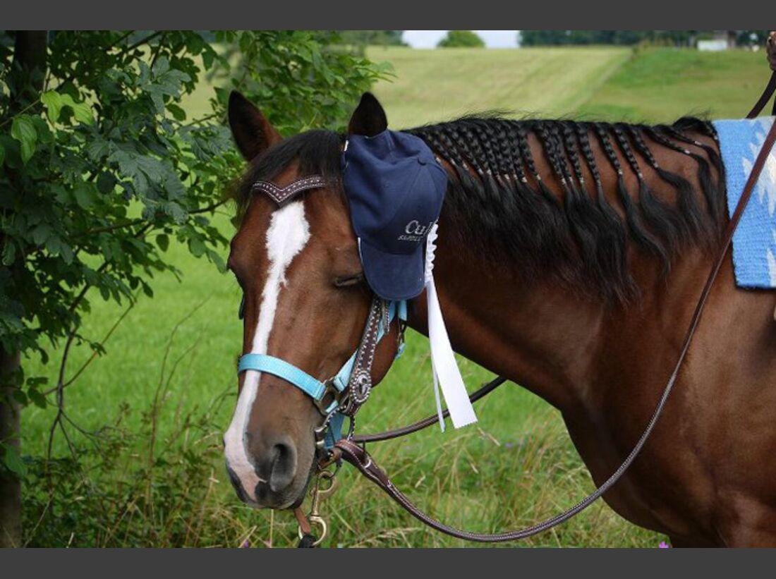 CAV-Fan-Pferde-Leseraktion-2013-Poldi (jpg)