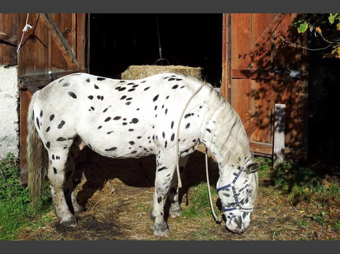 CAV-Fan-Pferde-Leseraktion-2013-Spot-2 (jpg)