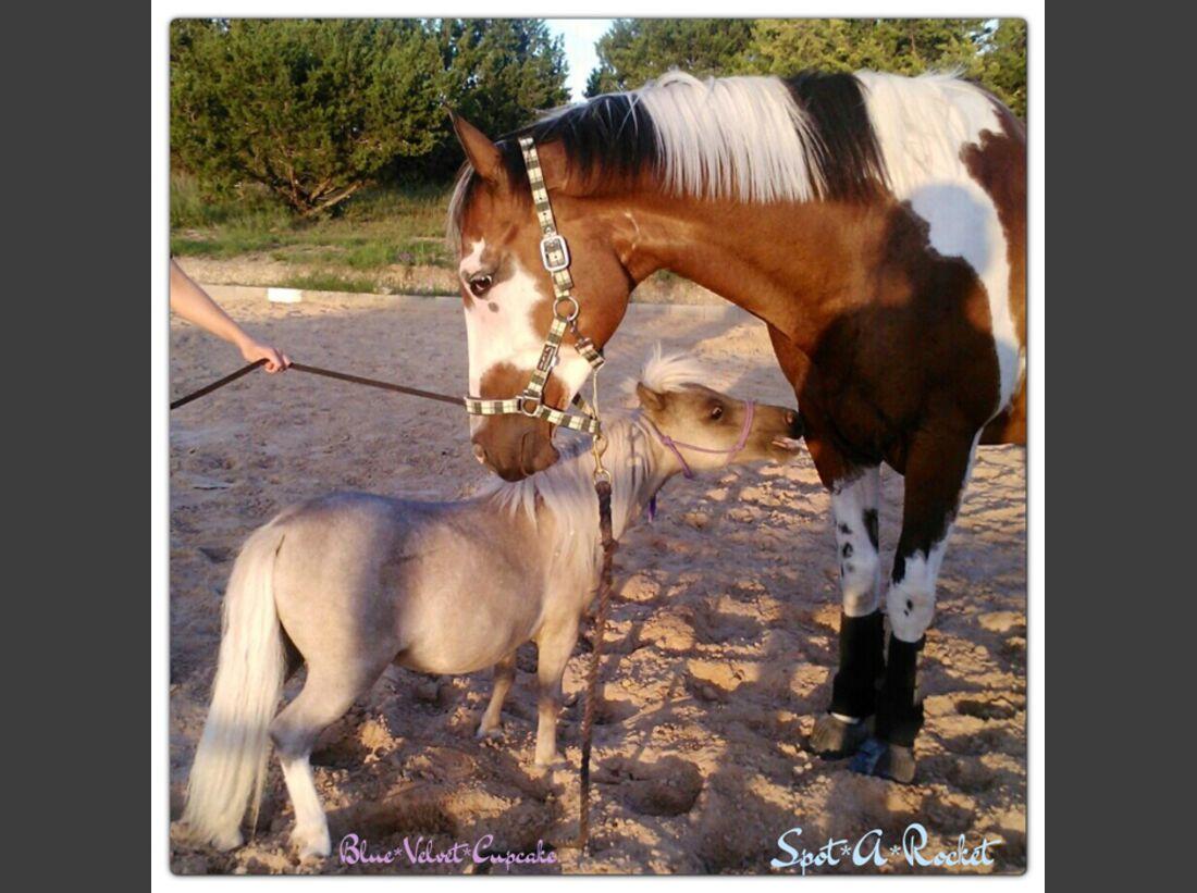 CAV-Fan-Pferde-Leseraktion-2013-Spot (JPG)