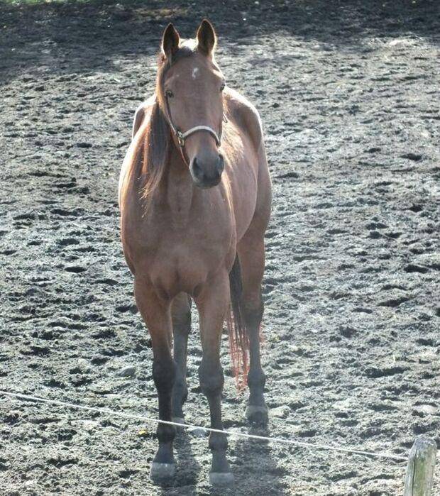 CAV-Fan-Pferde-Leseraktion-2013-Traber_01 (jpg)