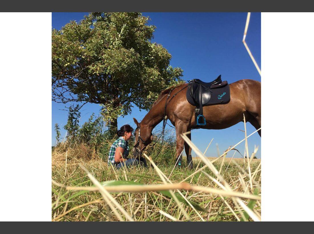 CAV Fan-Pferde Quinto Natalie