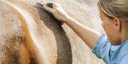 CAV Faszien Pferd Training Pflege Aufmacher