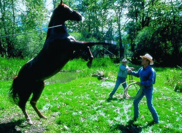 CAV  Filmpferde Pilgrim der Pferdeflüsterer  Redford Artikel