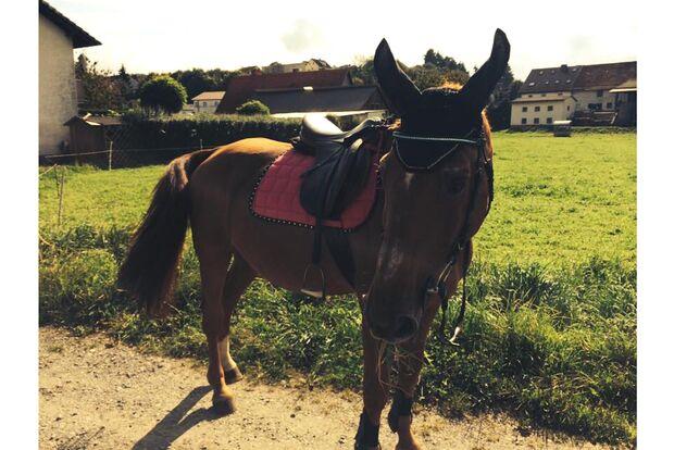 CAV Geburtstagspferde Anni Seran