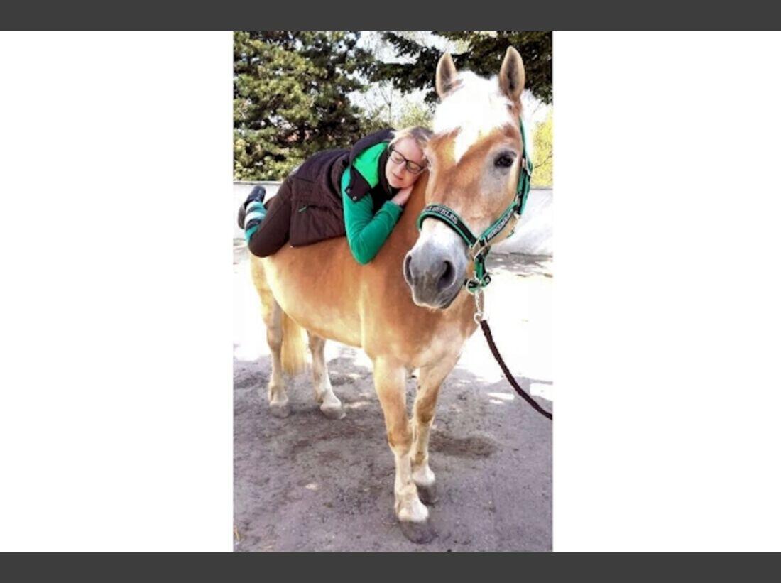 CAV Haflinger Pferderasse Rasse Leserfotos 55