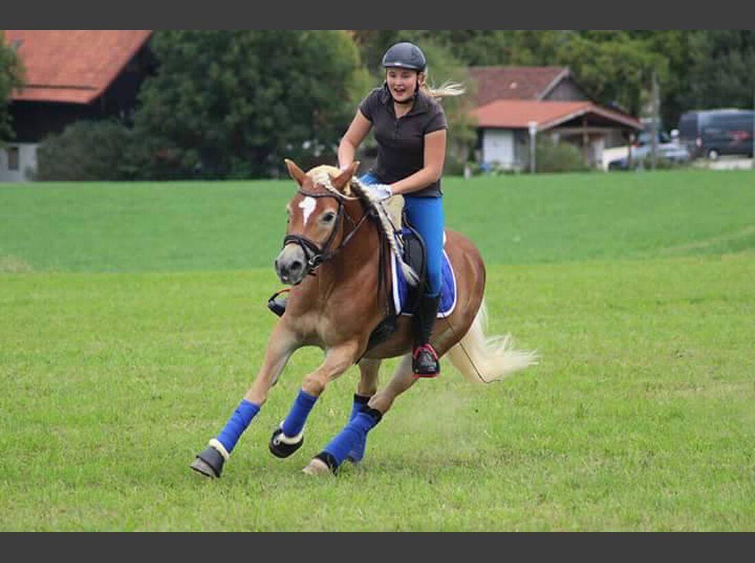 CAV Haflinger Pferderasse Rasse Leserfotos Gini Reggae