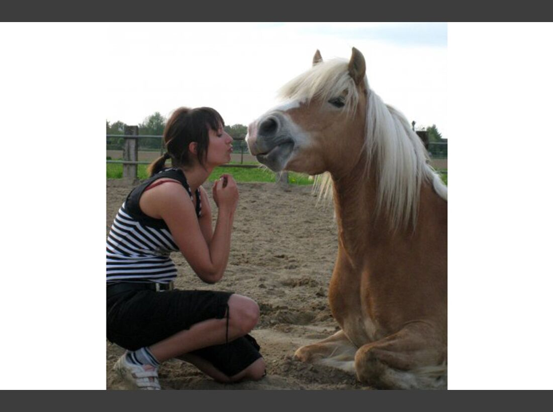 CAV Haflinger Pferderasse Rasse Leserfotos Ute Reimann