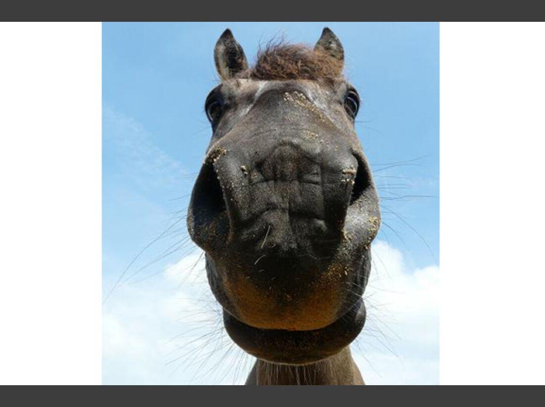 CAV Leserfotos Pferdenasen 1