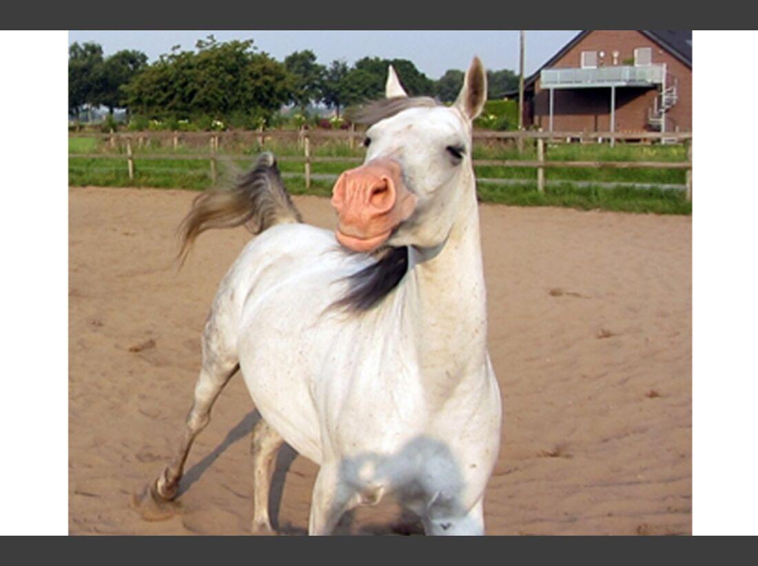 CAV Leserfotos Pferdenasen 28