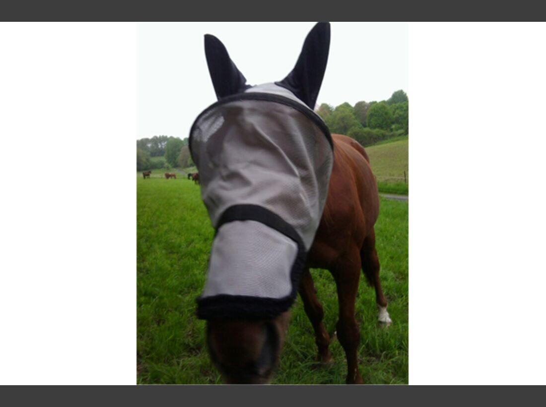 CAV Leserfotos Pferdenasen 34