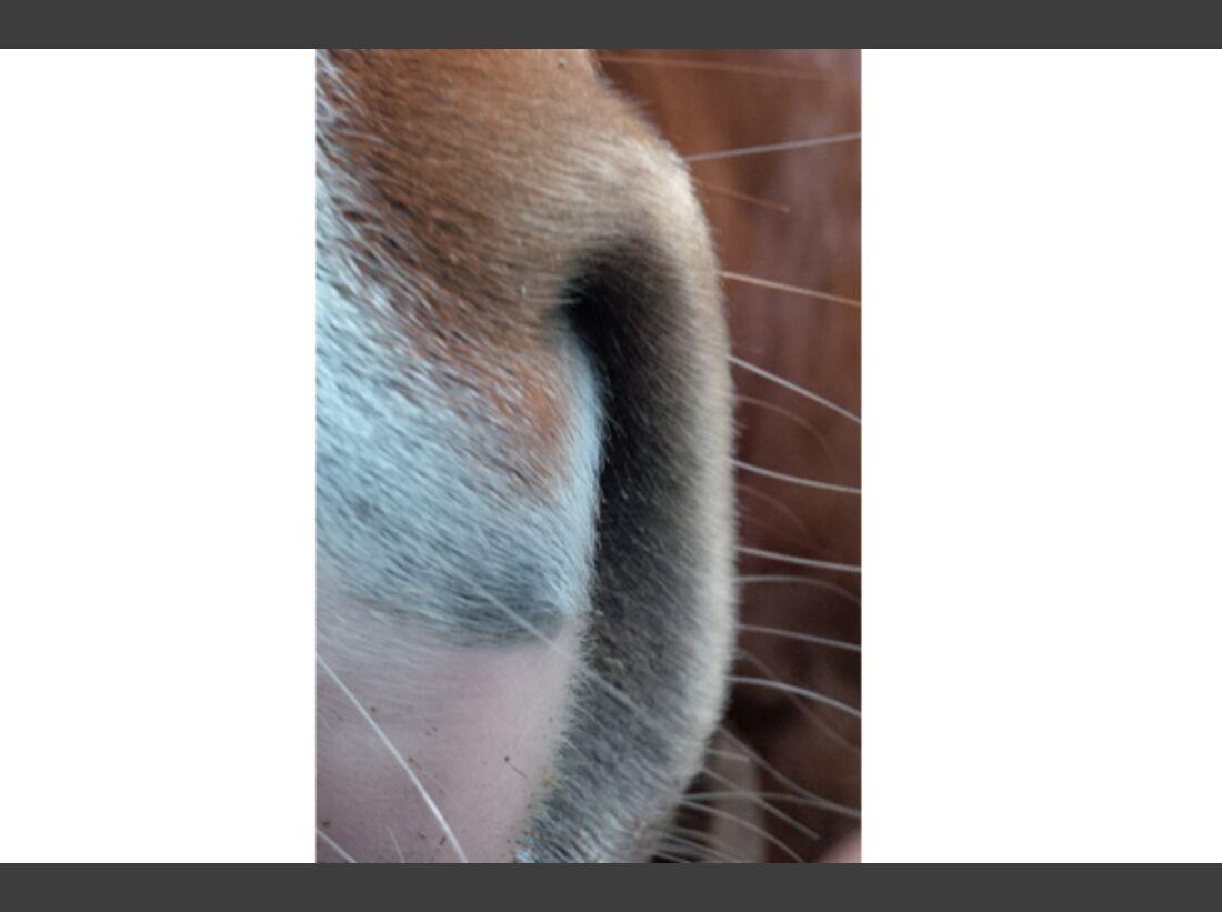 CAV Leserfotos Pferdenasen 37