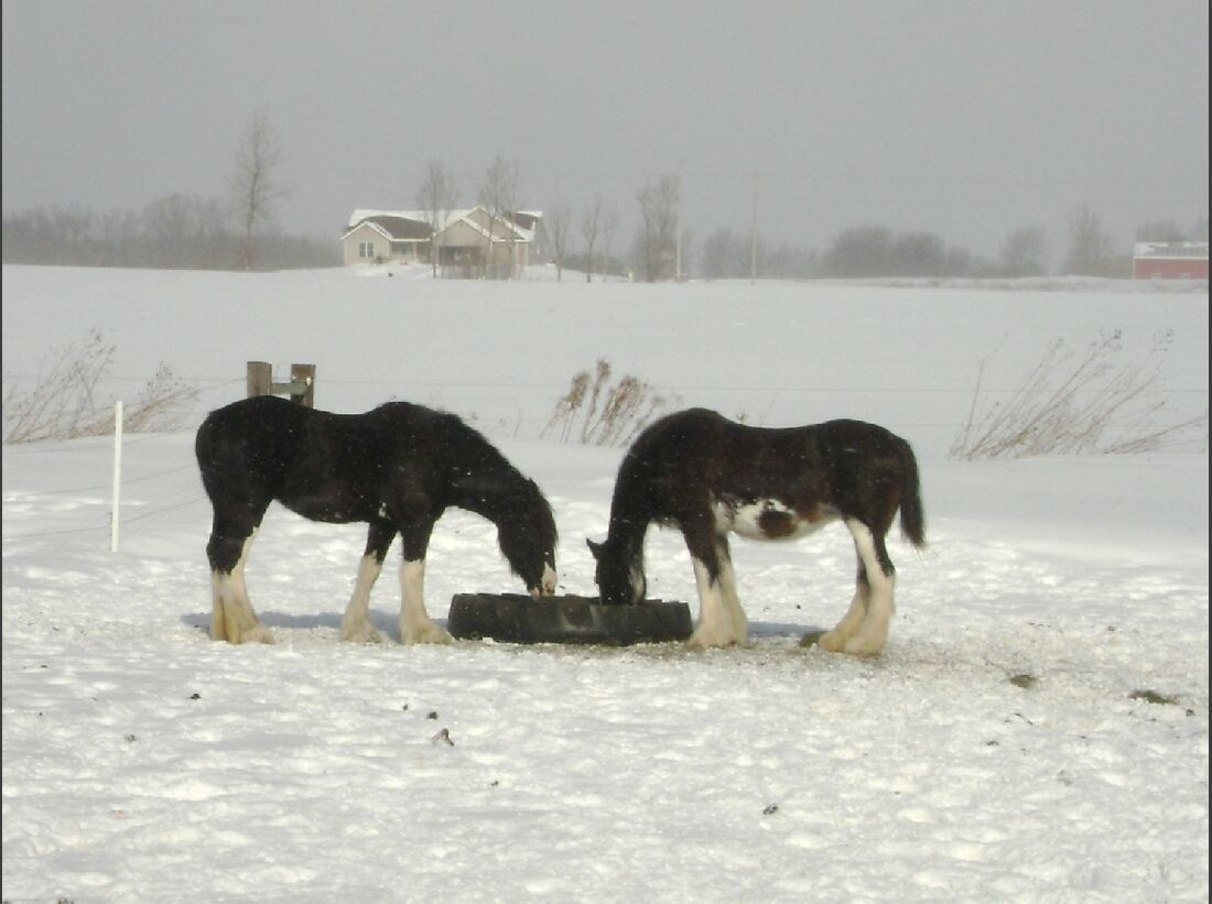 CAV_MS Clydesdales_Winter in Michigan (jpg)