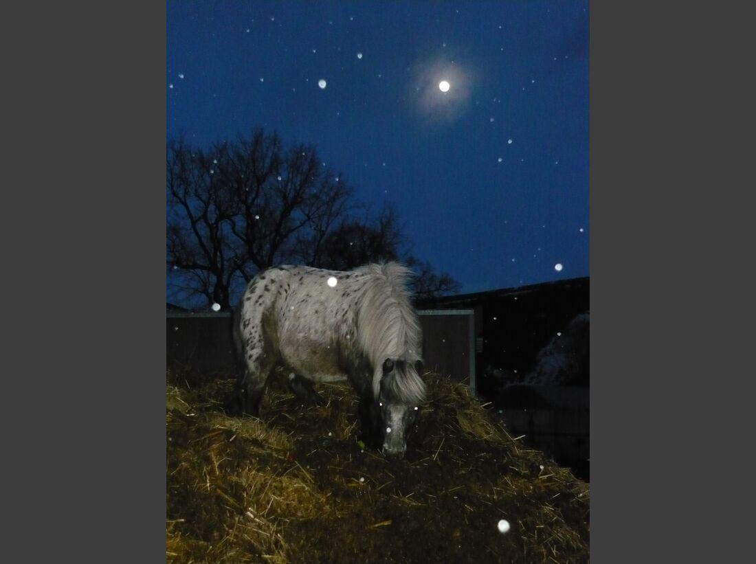 CAV MS Pferde im Winter_P1020148 (JPG)