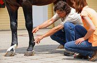 CAV Medizin Tierarzt Bester Doc Body Check 6