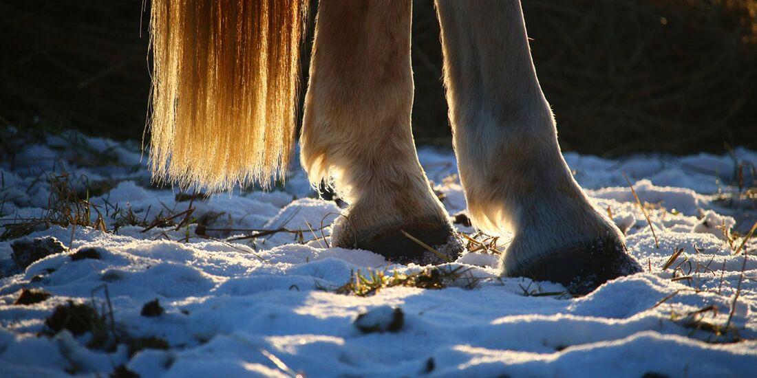 CAV Pferd Hufe Winter Aufmacher