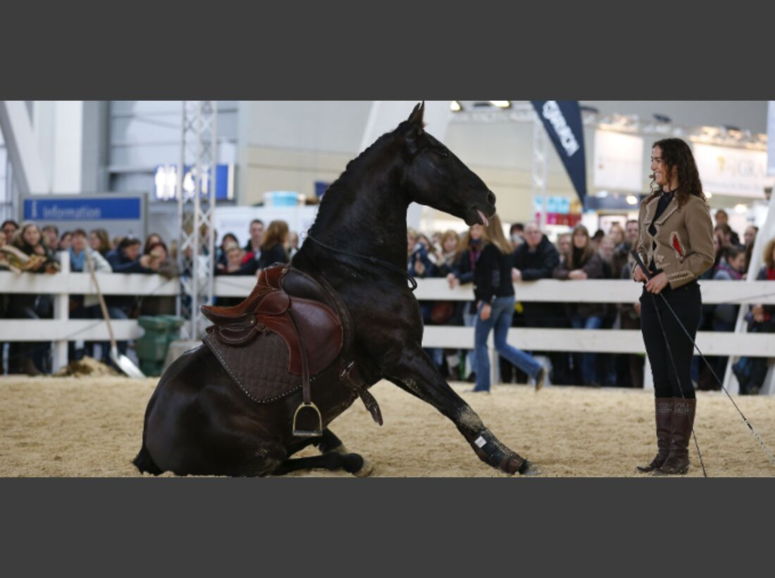 CAV Pferd Jagd 2014 Messe Kenzie Dysli