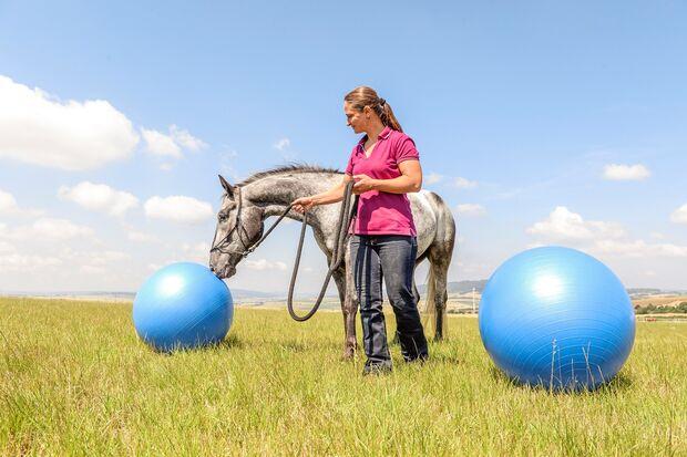 CAV Pferd Jagd Vivian Gabor