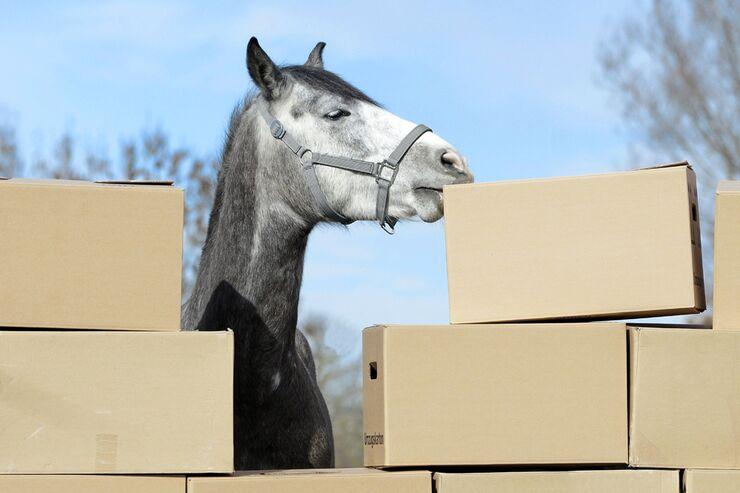 CAV Pferd Umzugskartons