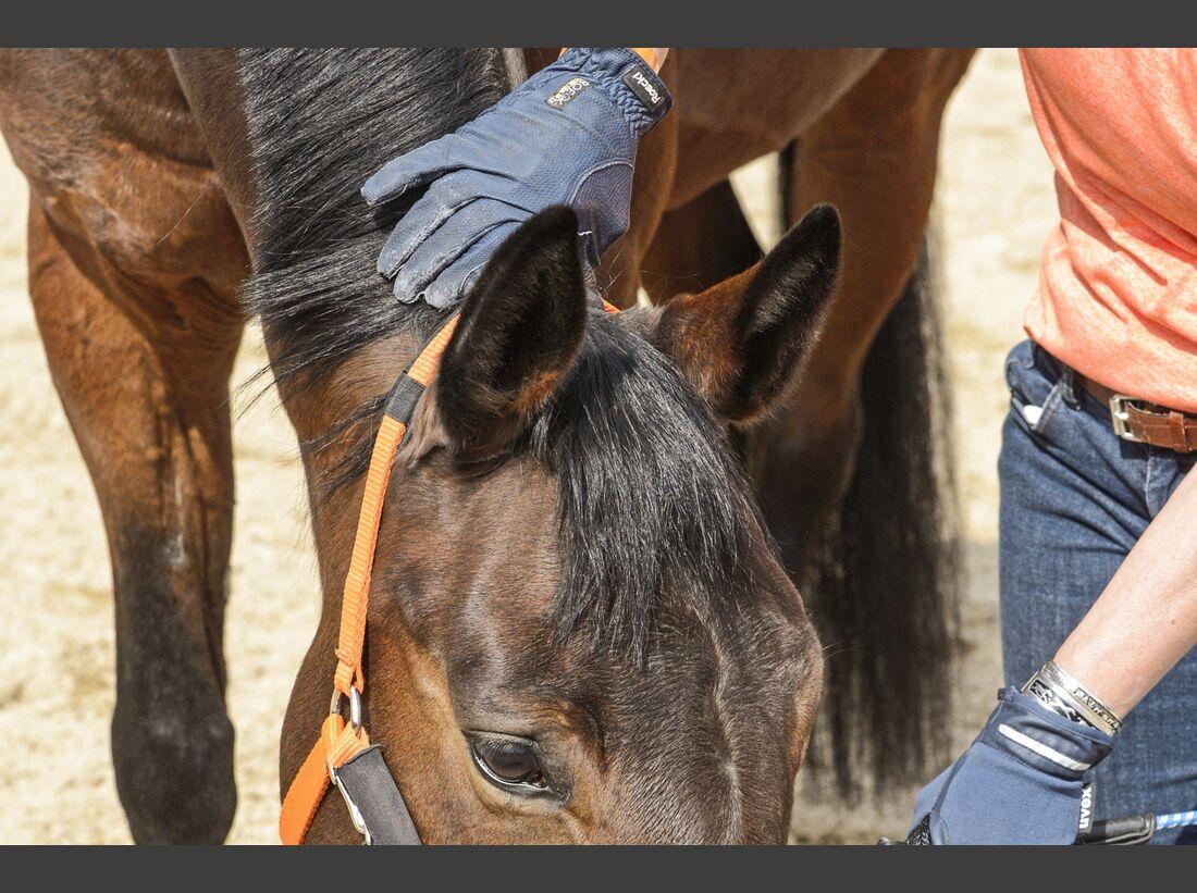 CAV Pferd im Nacken massieren